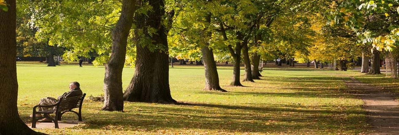Secangkir Petang Panjang di Central Park